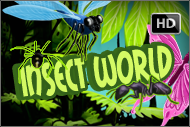 insectworldslot